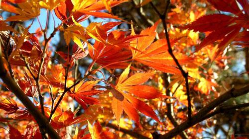 foliage1_500